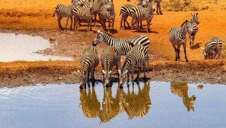 Passer des vacances en famille au Kenya